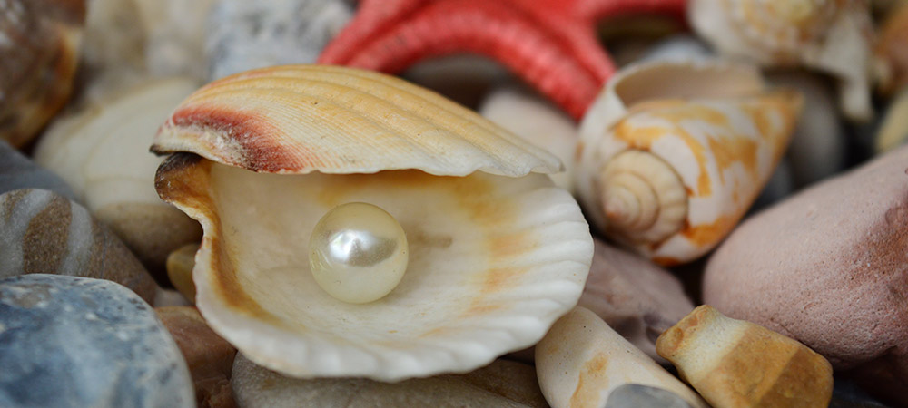 An image of a pearl in a clam to represent the importance of patent data to businesses